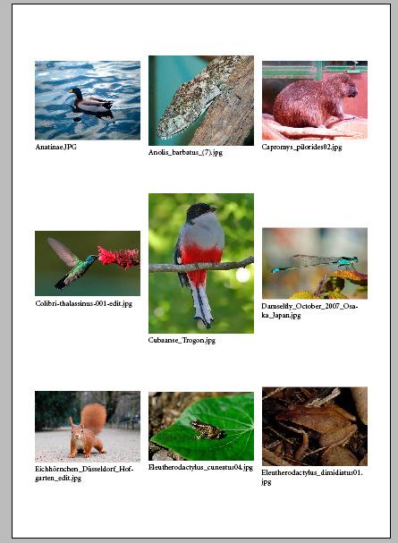catalogo de imágenes final indesign